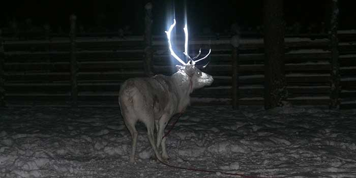 Permanent Metallic Reindeer